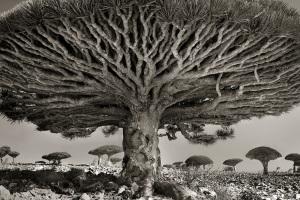 beth_moon_ancient_tree