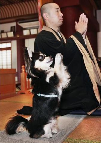 dog praying