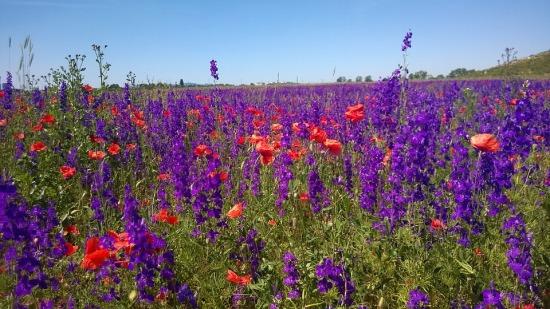 field-of-flowers-1164575_960_720