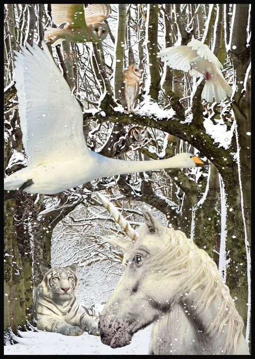 """""""White World"""" by Wise Owl Claudia"""