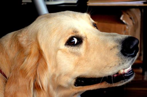 smiling doggie
