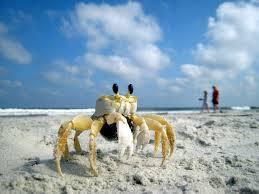 Crab_Perspective