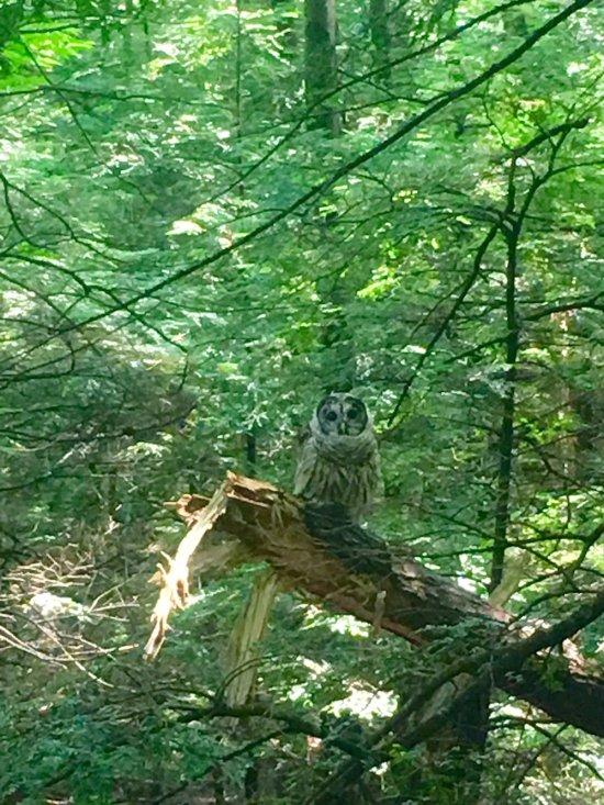 FROM WISE OWL AMELIA TAKEN recently in tyringham, Massachusetts