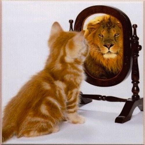 cat-sees-lion-mirror-500x500