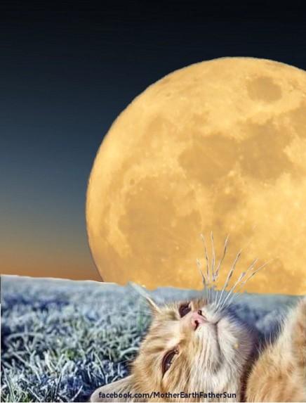 full-moon-in-aries-20161016-cat