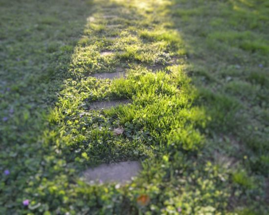 light-the-path-1-nash750x600