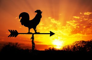 roosteratdawn