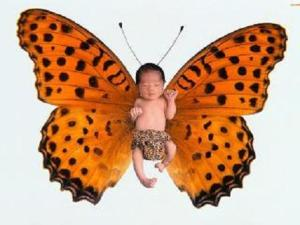 Butterflybaby