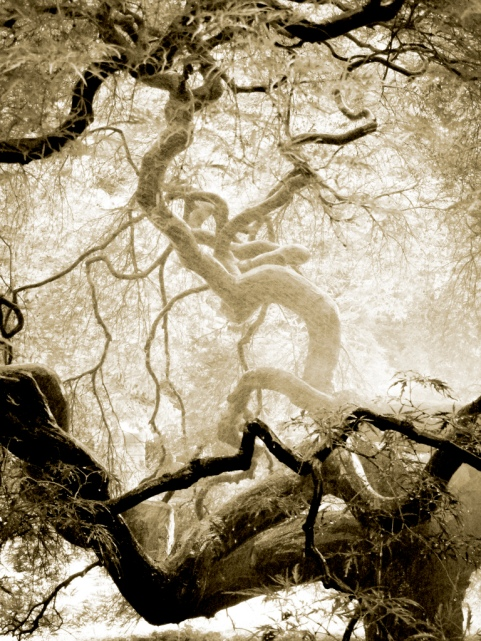 twisty tree sepia